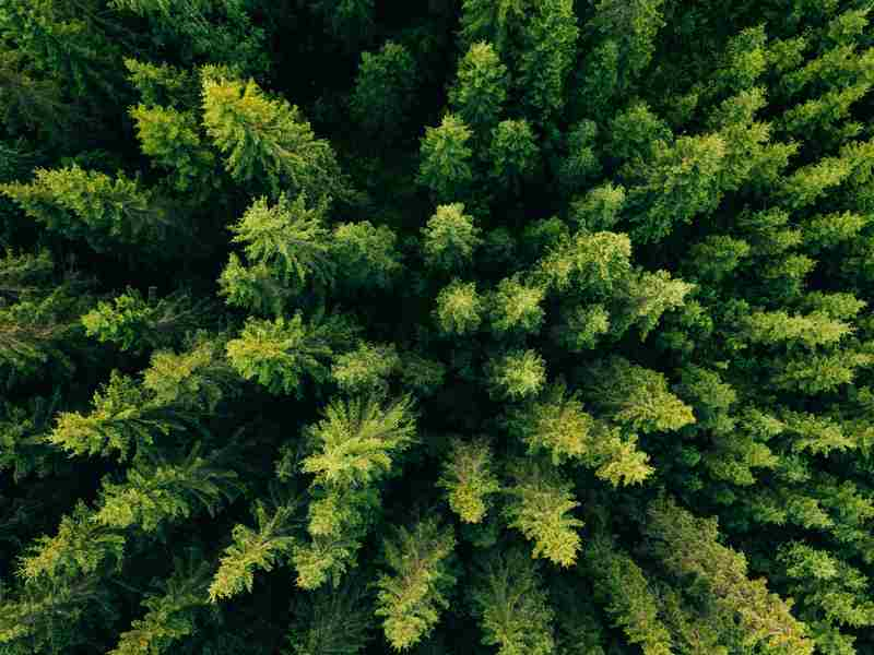 Boost Traffic With Evergreen Content